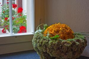 Blumen - auch im Haus