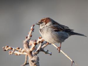 wacher Vogel 1