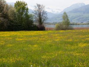 Landschafts-Impression am Obersee.